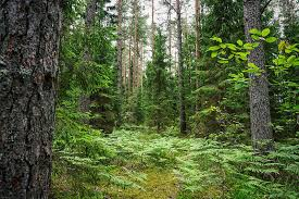 Interessante per chi valuta la possibilita' di investire in Lettonia nel settore della lavorazione del legno
